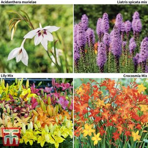 85 Wildlife Friendly Bulb Collection Kb4358ffp Garden Tools