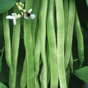 Runner Bean 'snowstorm' 64946 Plants & Seeds