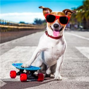 Cool Skateboard Dog In Sunglasses Card, Square Card Size By Moonpig Mnp026 Sq Sq
