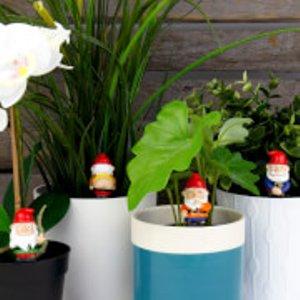 Gift Republic Naughty Gnomes - Mini Plant Pot Planters  Gr452094