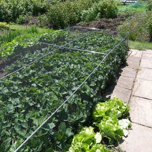 Gardening Naturally Fruit And Vegetable Cages 500mm High