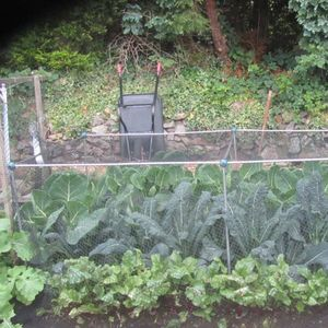 Gardening Naturally Fruit And Vegetable Cages 900mm High