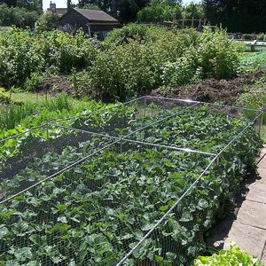 Gardening Naturally Strawberry Cages, Complete With Netting, Pegs & Clips (700mm/2ft 3in High)