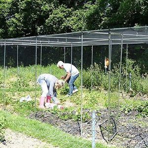 Gardening Naturally Walk In Fruit And Vegetable Cages
