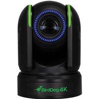 Birddog P4k Black 4k 10-bit Full Ndi Ptz Bd P4k