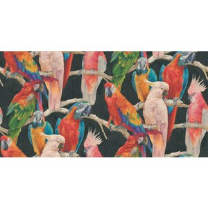 Albany Wallpapers Parrots, 823608 Painting & Decorating