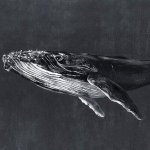 Coordonne Mural Humpback Whale 9500102 Diy