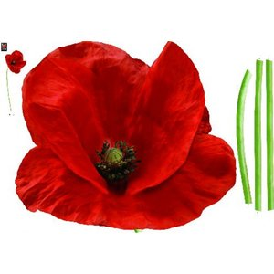 Creative Wall Art Stickers Large Poppy Sticker, 160831 Painting & Decorating