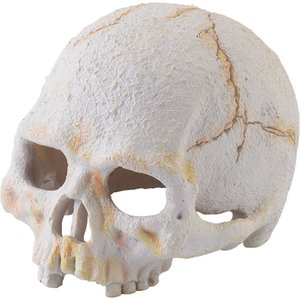 Exo Terra Primate Skull Small, Pt2926 Dhs103 Pets