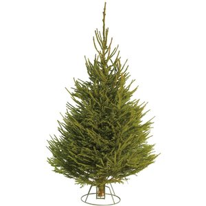 None 6-7ft Norway Spruce Real Cut Christmas Tree Decorations, Green