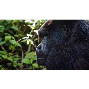 G Adventures Culture & Wildlife Of Uganda & Rwanda 22584 Holidays