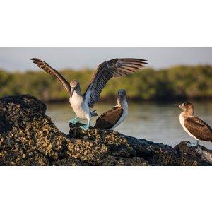 G Adventures Galápagos — South & East Islands Aboard The Eden 25048 Holidays