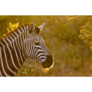 G Adventures Tailormade Southern Africa: Safari & Camping Adventure 25115 Holidays