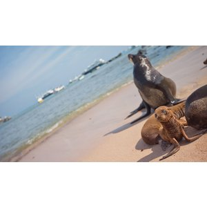 G Adventures Upgraded Land Galapagos With Quito 25022 Holidays
