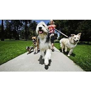 Holly And Hugo Animal Training & Pet Sitting Course Toys