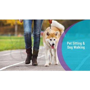 One Education Pet Sitting & Dog Walking Online Diploma Toys