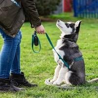 Lead Academy Dog Leash Training Online Course