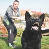 Lead Academy Dog Training - Stop Dog Barking Online Course