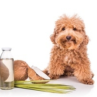 Lead Academy Natural Remedies for Dog Online Course
